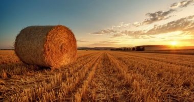 Влагомеры сена, соломы, сенажа и силоса.